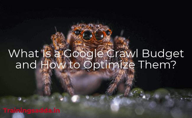 What Is a Google Crawl Budget and How to Optimize Them?
